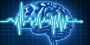 blog_brain_function